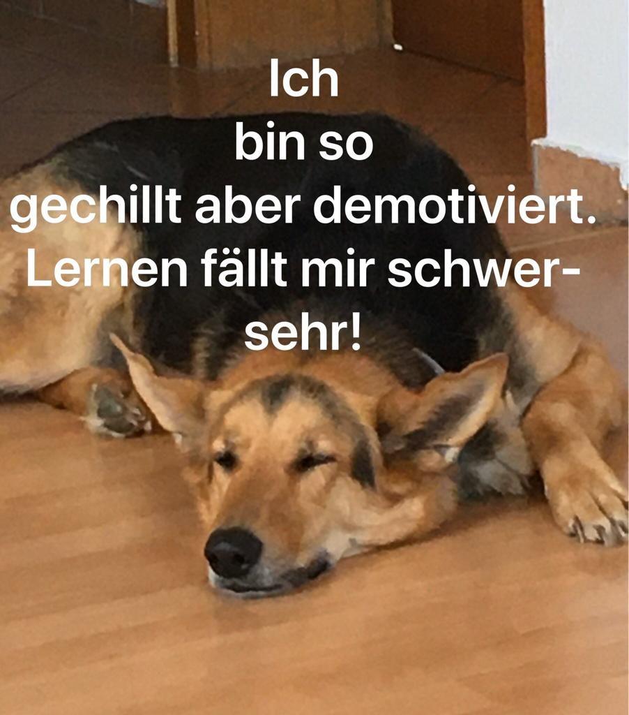 Schreglmann_Noah_Elfchen